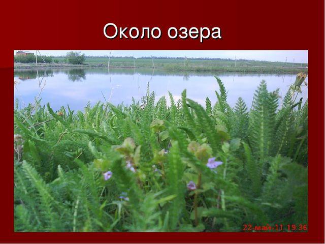 Около озера