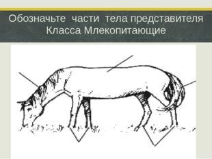 Обозначьте части тела представителя Класса Млекопитающие