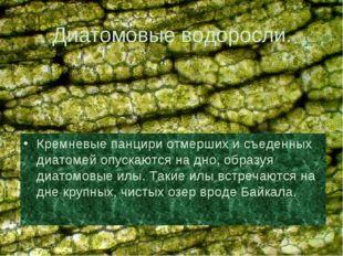 Диатомовые водоросли. Кремневые панцири отмерших и съеденных диатомей опускаю
