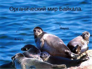 Органический мир Байкала. Флора Фауна
