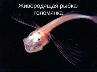 Живородящая рыбка-голомянка