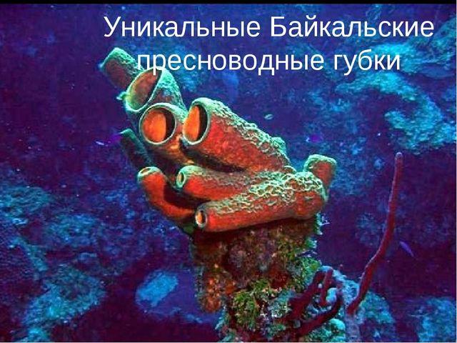Уникальные Байкальские пресноводные губки