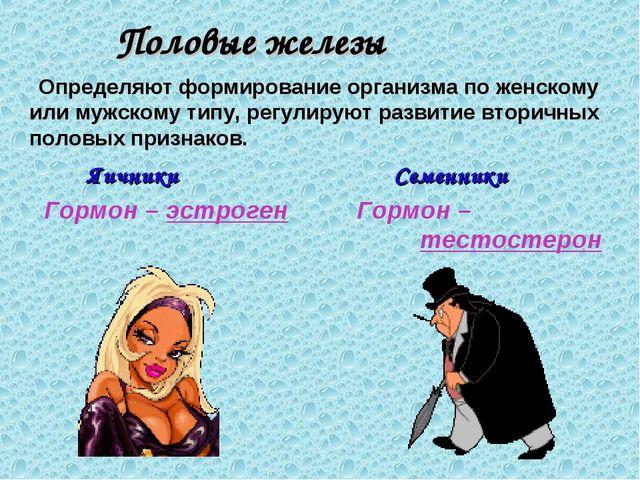 Половые железы Определяют формирование организма по женскому или мужскому ти...