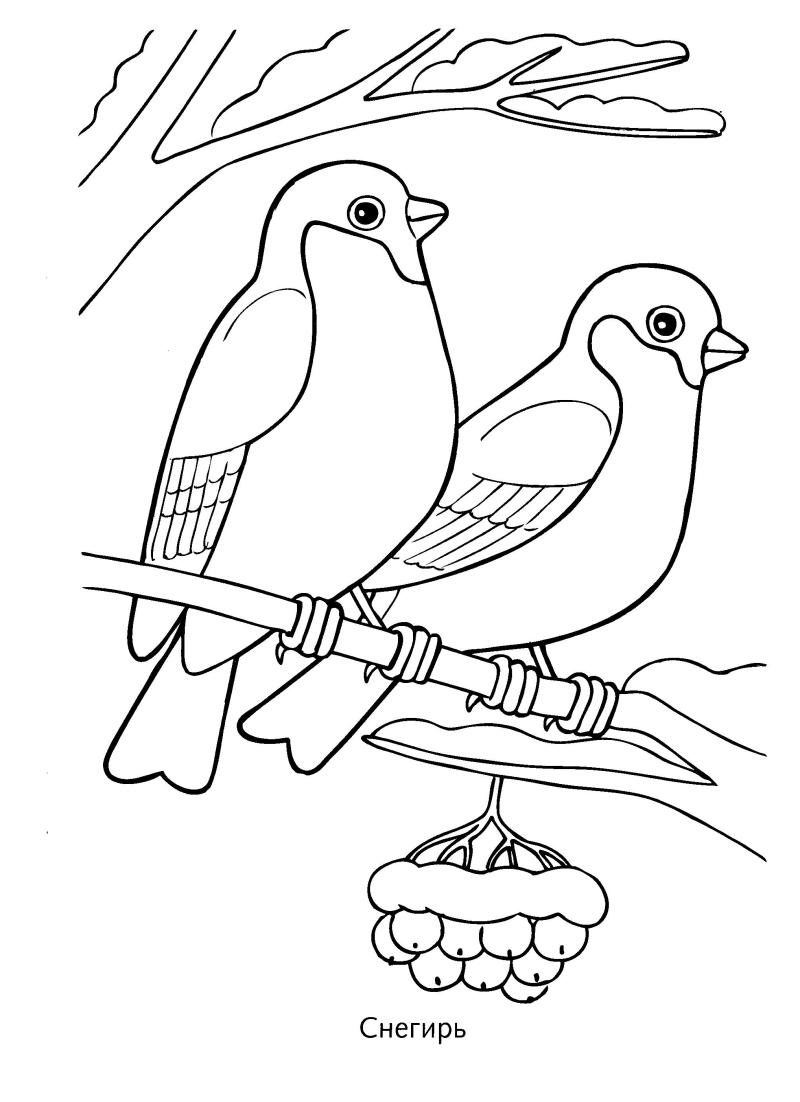 Детские раскраски с птицами