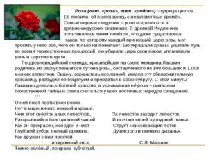 Роза (лат. «роза», греч. «родон») – царица цветов. Её любили, ей поклонялись