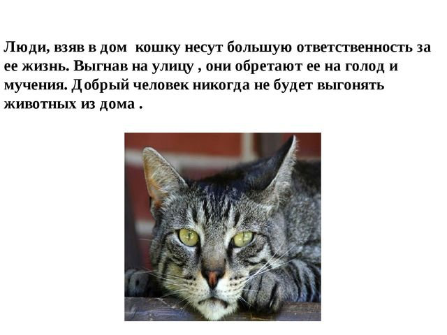 Люди, взяв в дом кошку несут большую ответственность за ее жизнь. Выгнав на у...