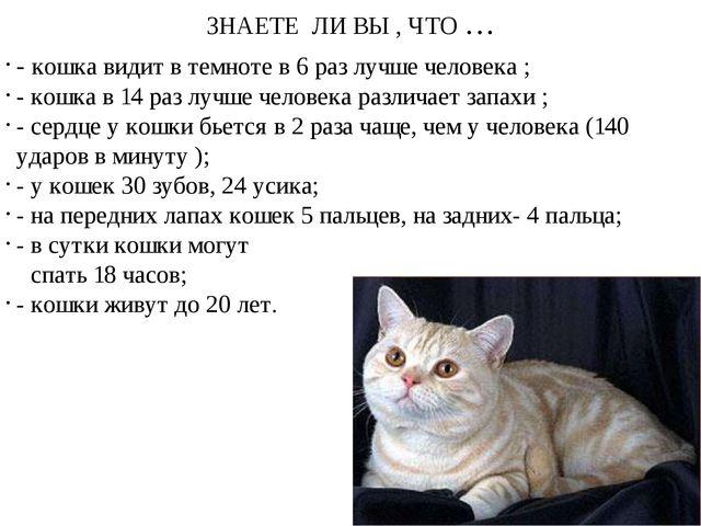 ЗНАЕТЕ ЛИ ВЫ , ЧТО … - кошка видит в темноте в 6 раз лучше человека ; - кошка...