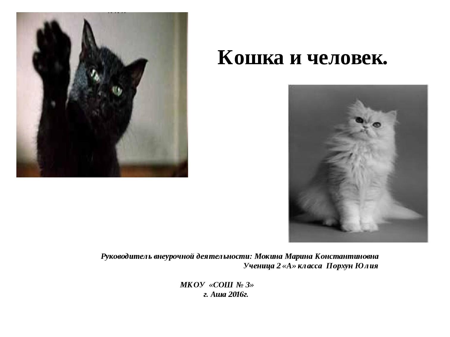 Кошка и человек. Руководитель внеурочной деятельности: Мокина Марина Констант...