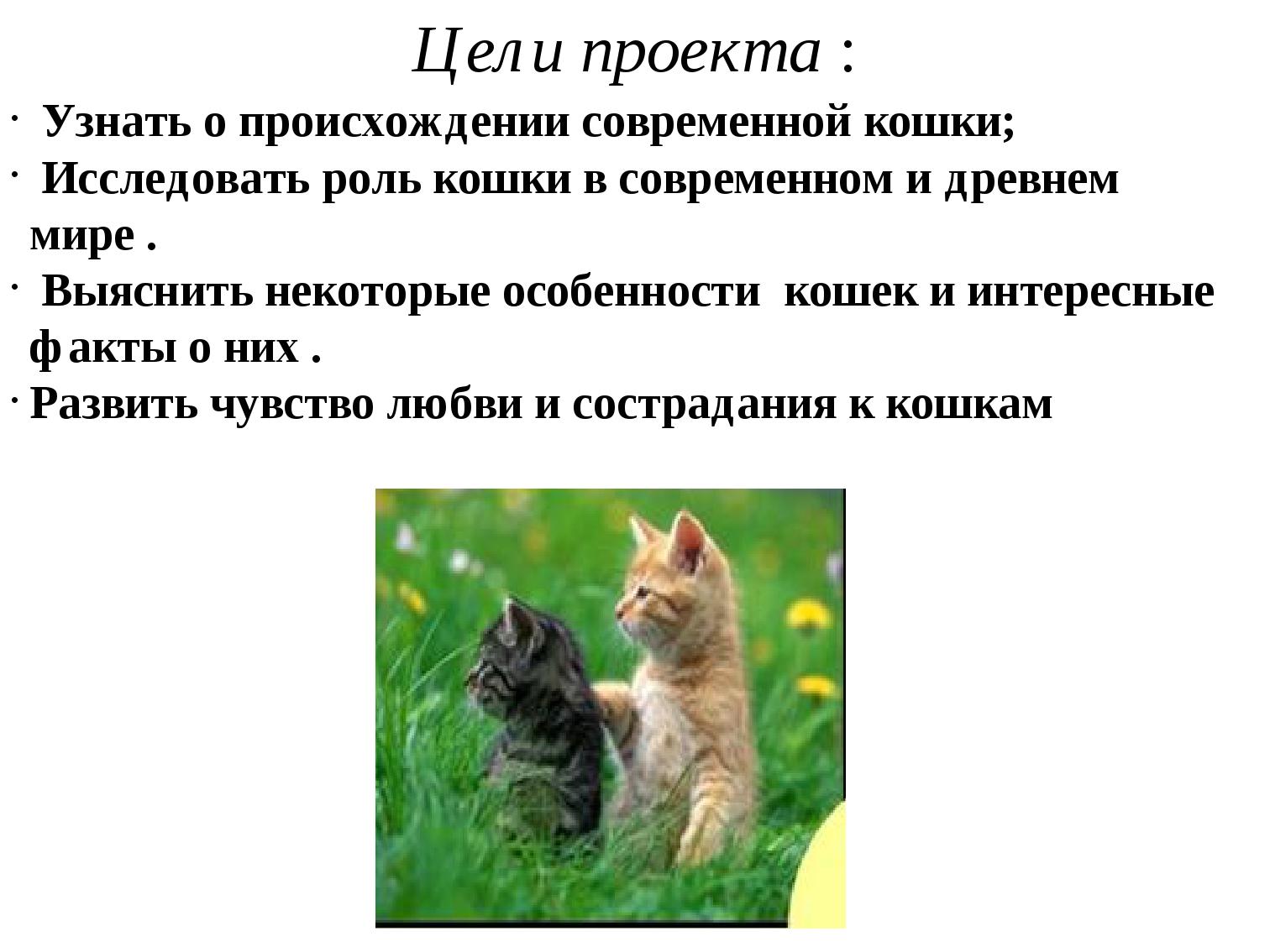 Цели проекта : Узнать о происхождении современной кошки; Исследовать роль кош...