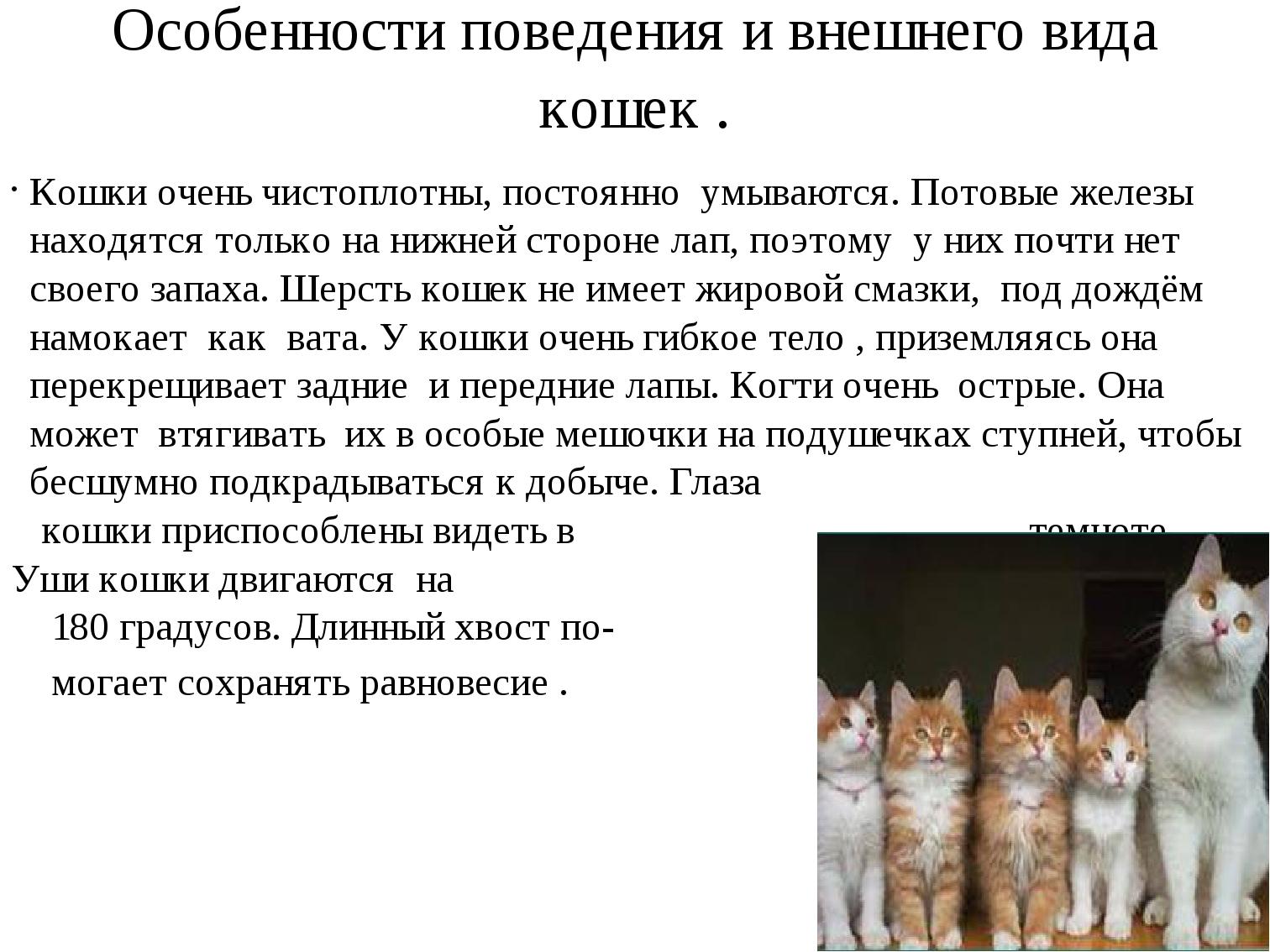 Особенности поведения и внешнего вида кошек . Кошки очень чистоплотны, постоя...