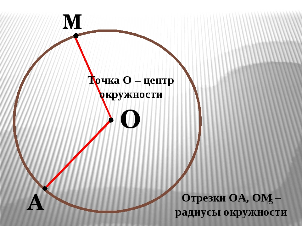 О М А Точка О – центр окружности Отрезки ОА, ОМ – радиусы окружности
