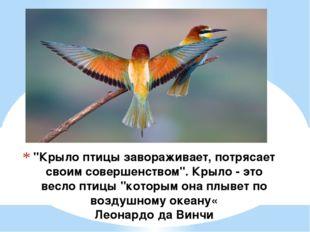 """""""Крыло птицы завораживает, потрясает своим совершенством"""". Крыло - это весло"""