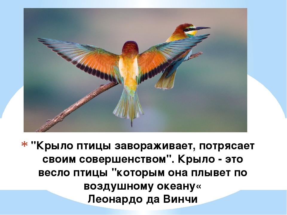 """""""Крыло птицы завораживает, потрясает своим совершенством"""". Крыло - это весло..."""