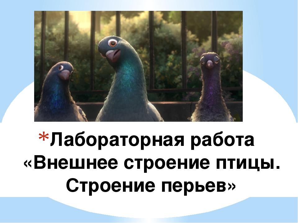 Лабораторная работа «Внешнее строение птицы. Строение перьев»