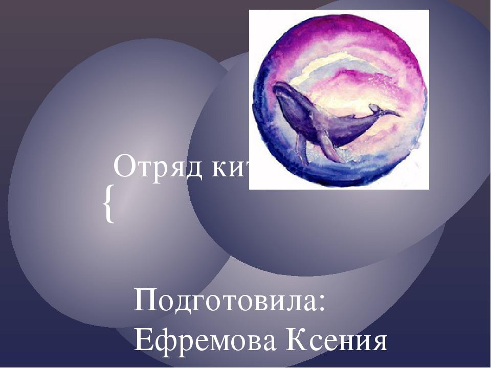 Отряд китообразные Подготовила: Ефремова Ксения {