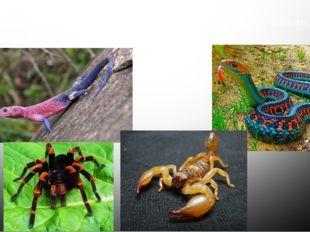 Юго-запад США богат пресмыкающимися – ящерицами, змеями, скорпионами, ядовиты