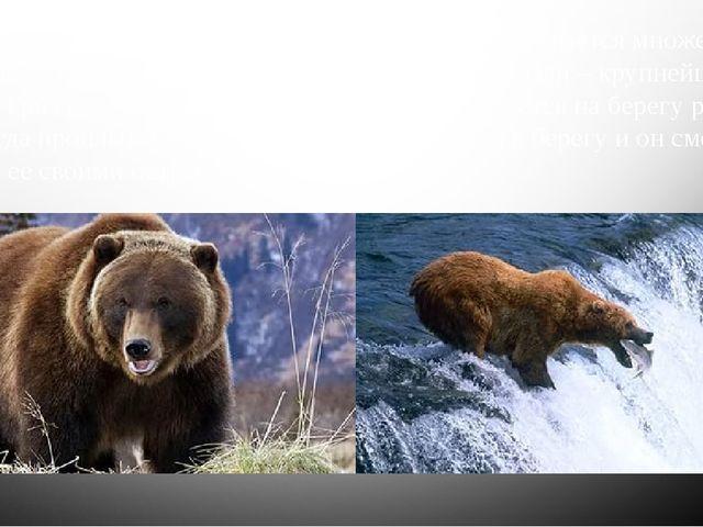 Животные СШАочень разнообразны, среди них встречается множество хищников. В...