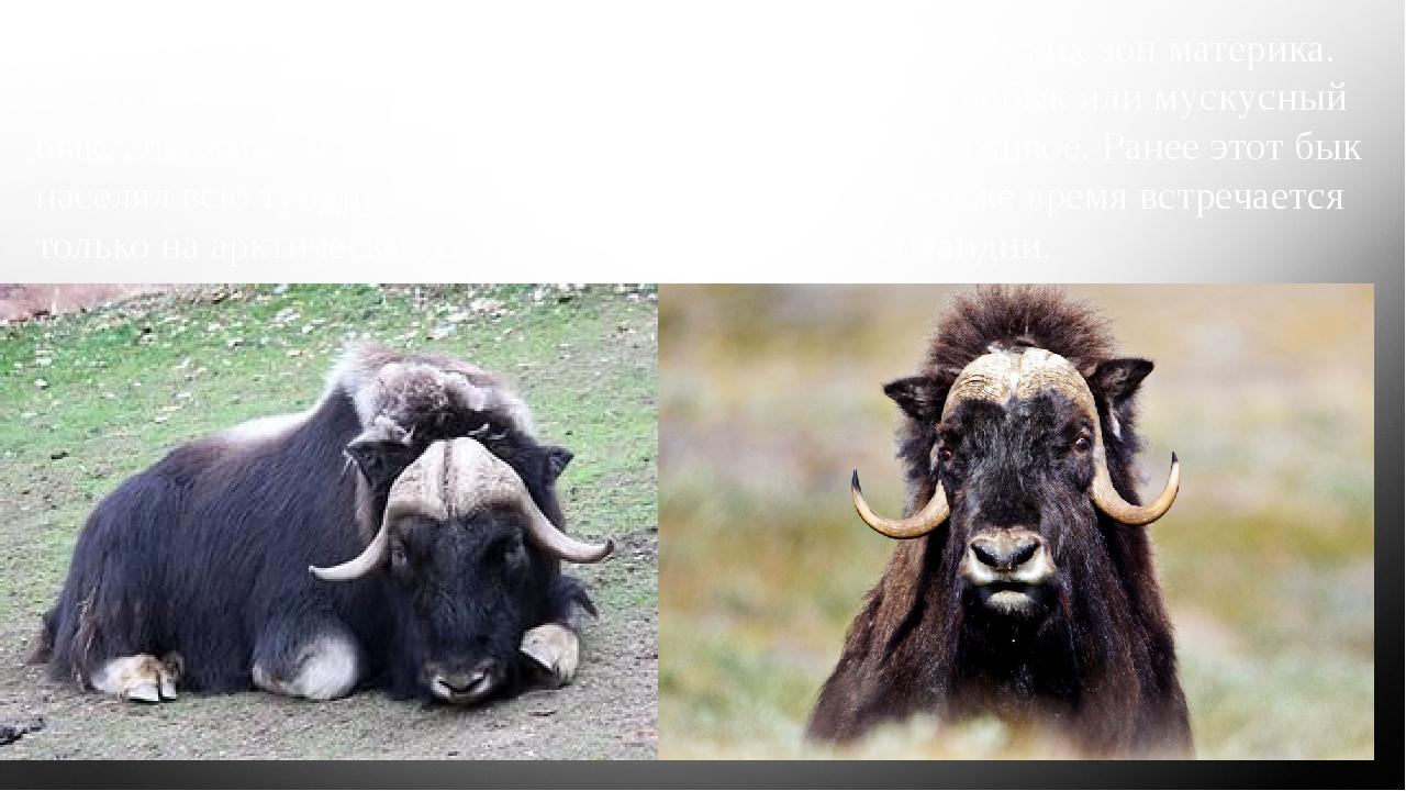 Животные США различны в зависимости от климатических зон материка. В тундре в...