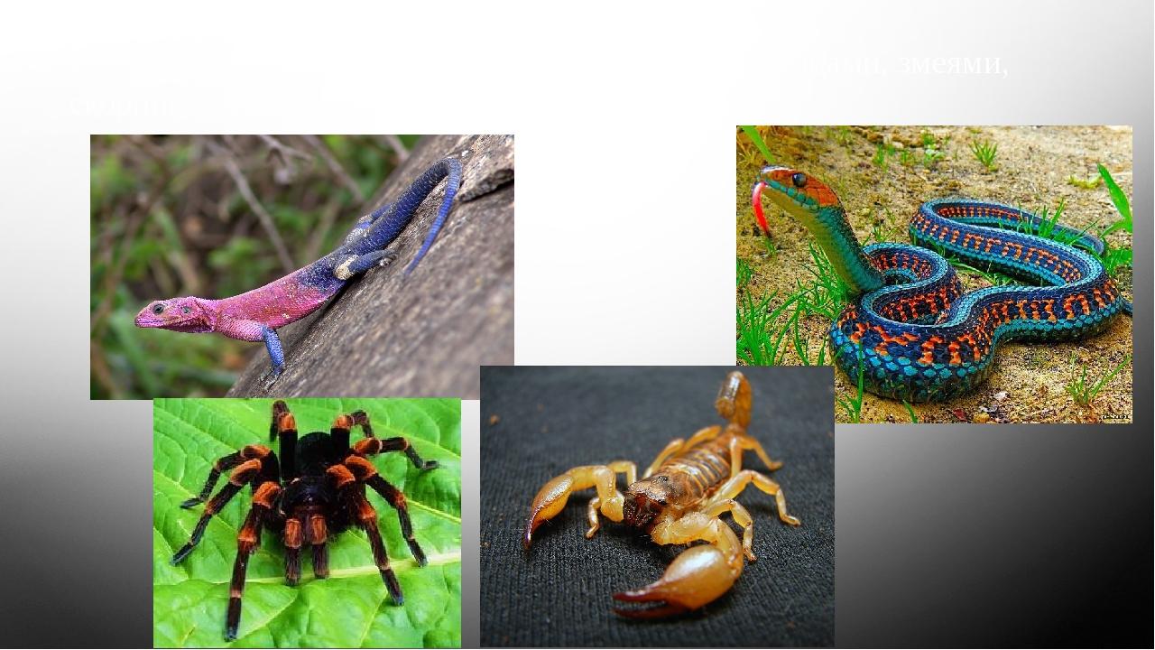 Юго-запад США богат пресмыкающимися – ящерицами, змеями, скорпионами, ядовиты...