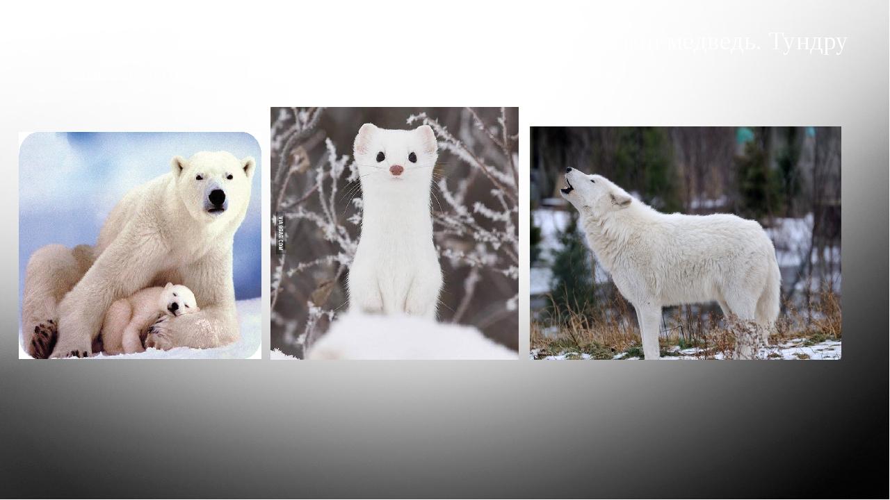 На северном побережье материка встречается белый медведь. Тундру населяют та...