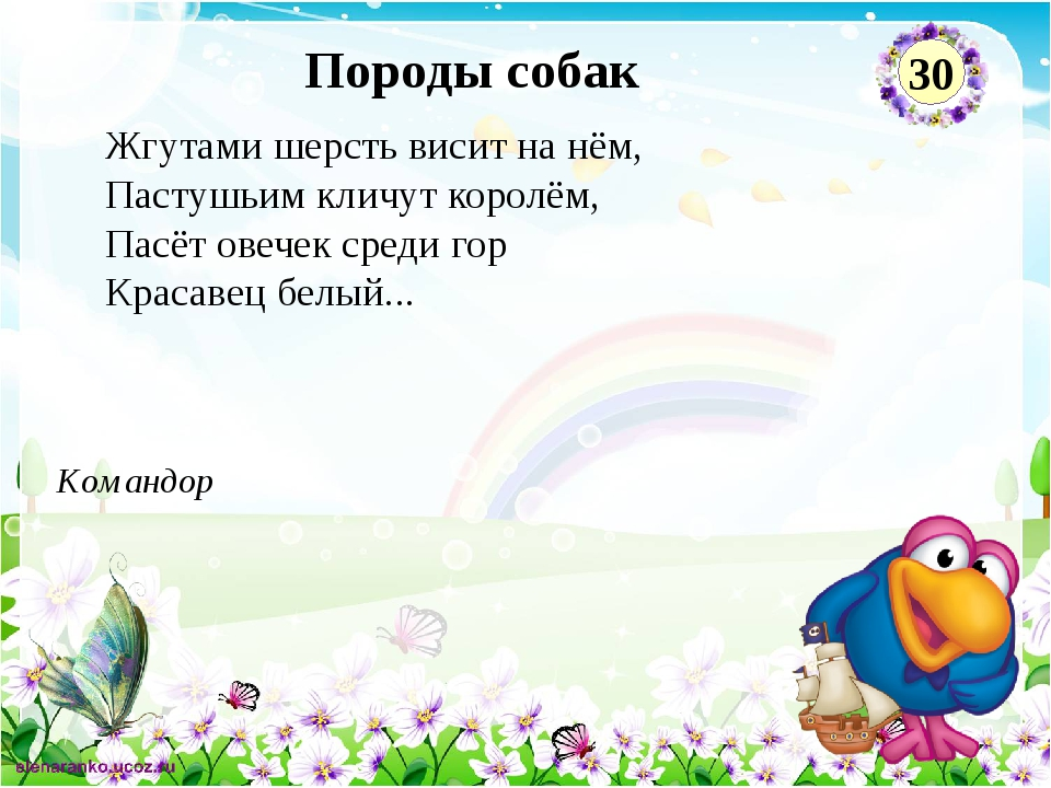 Командор Породы собак 30 Жгутами шерсть висит на нём, Пастушьим кличут королё...