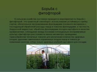 Борьба с фитофторой В сельском хозяйстве постоянно проводятся мероприятия по