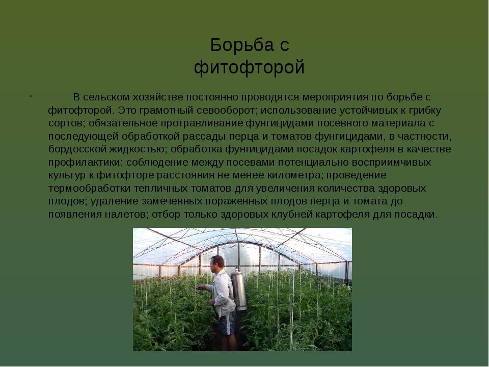 Борьба с фитофторой В сельском хозяйстве постоянно проводятся мероприятия по...
