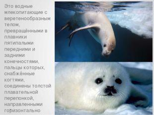Это водные млекопитающие с веретенообразным телом, превращёнными в плавники п