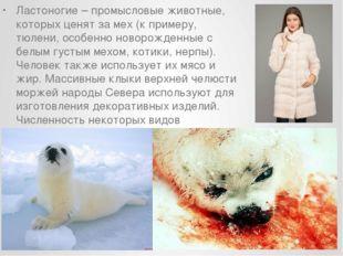 Ластоногие – промысловые животные, которых ценят за мех (к примеру, тюлени, о