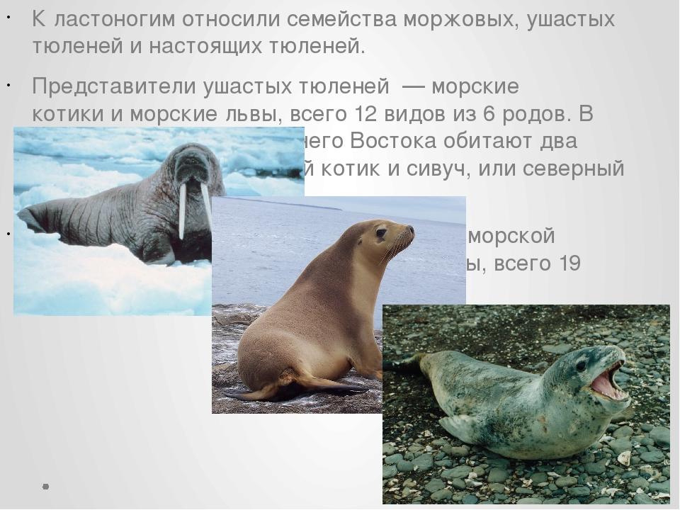 К ластоногим относили семействаморжовых,ушастых тюленейинастоящих тюленей...