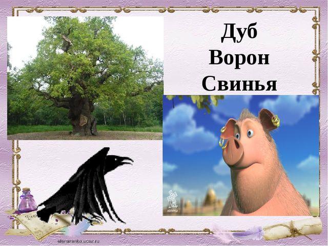 Дуб Ворон Свинья
