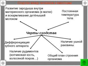 Сходство между человеком и животными Развитие зародыша внутри материнского ор