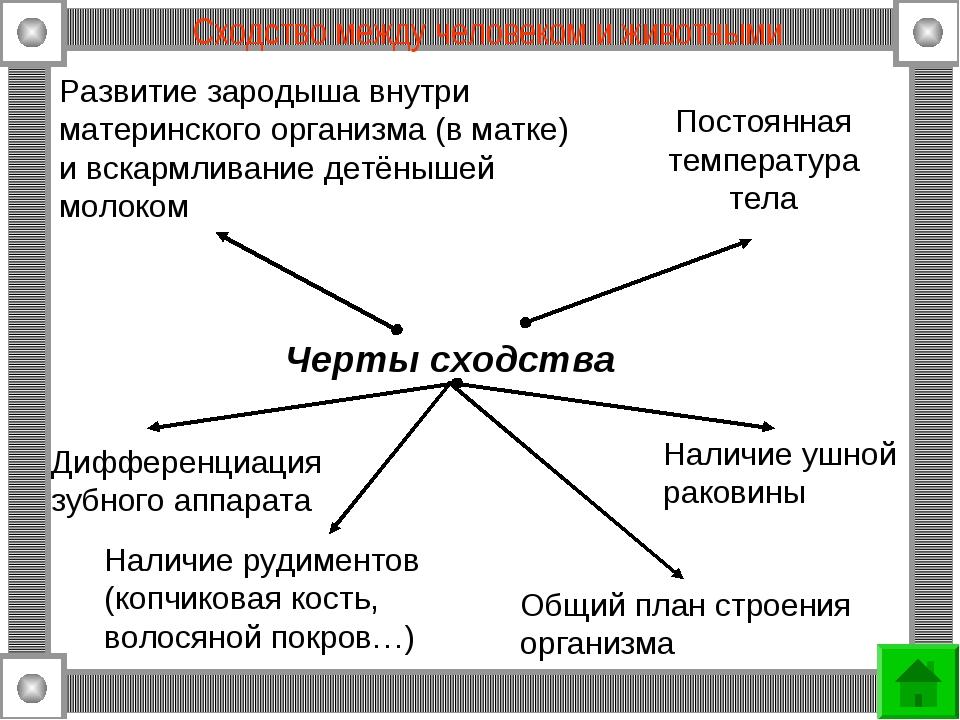 Сходство между человеком и животными Развитие зародыша внутри материнского ор...