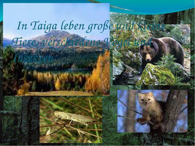 In Taiga leben große und kleine Tiere, verschiedene Vögel und Insekten