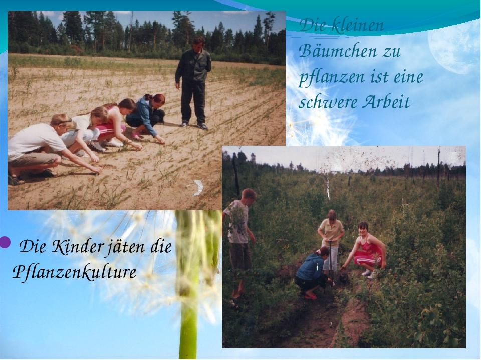 Die kleinen Bäumchen zu pflanzen ist eine schwere Arbeit Die Kinder jäten die...