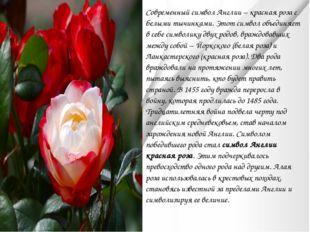 Современный символ Англии – красная роза с белыми тычинками. Этот символ объе
