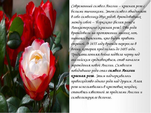Современный символ Англии – красная роза с белыми тычинками. Этот символ объе...
