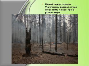 Лесной пожар страшен. Уничтожены деревья, птице негде свить гнездо, прочь ухо