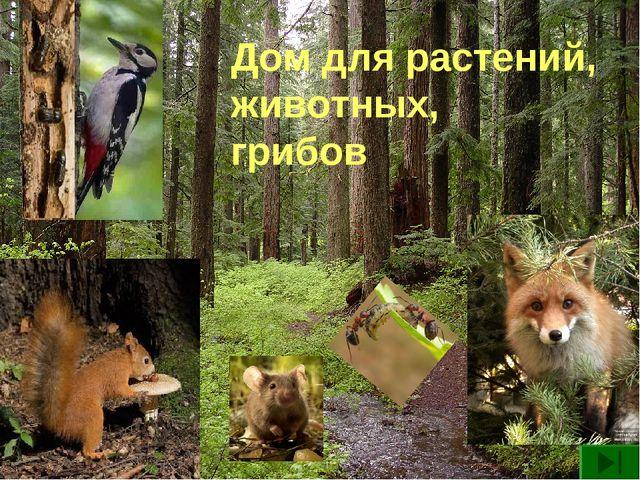 Дом для растений, животных, грибов