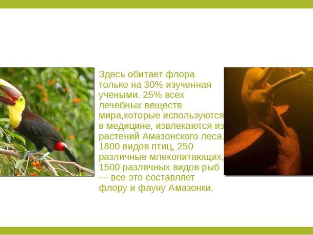 Здесь обитает флора только на 30% изученная учеными. 25% всех лечебных вещес...