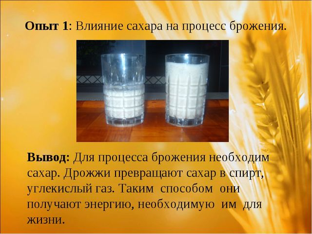 Опыт 1: Влияние сахара на процесс брожения. Вывод: Для процесса брожения необ...