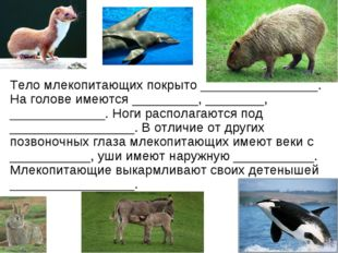 Тело млекопитающих покрыто ________________. На голове имеются _________, ___