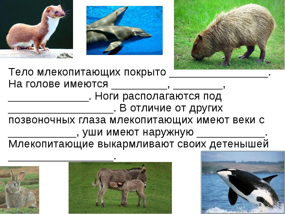 Тело млекопитающих покрыто ________________. На голове имеются _________, ___...