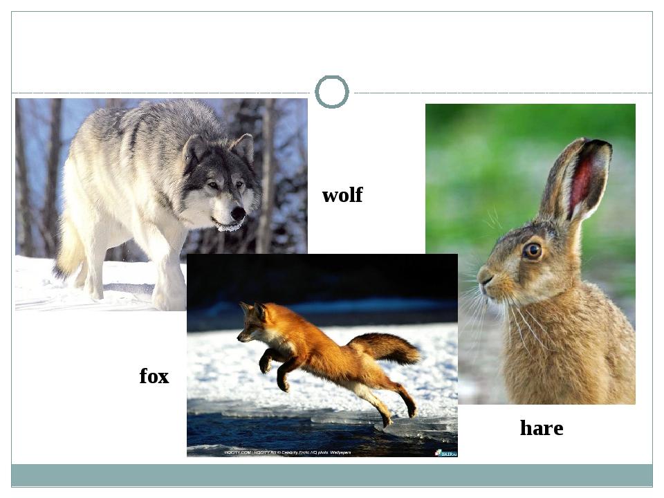 wolf fox hare