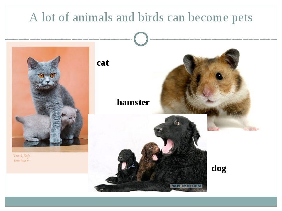 A lot of animals and birds can become pets cat hamster dog