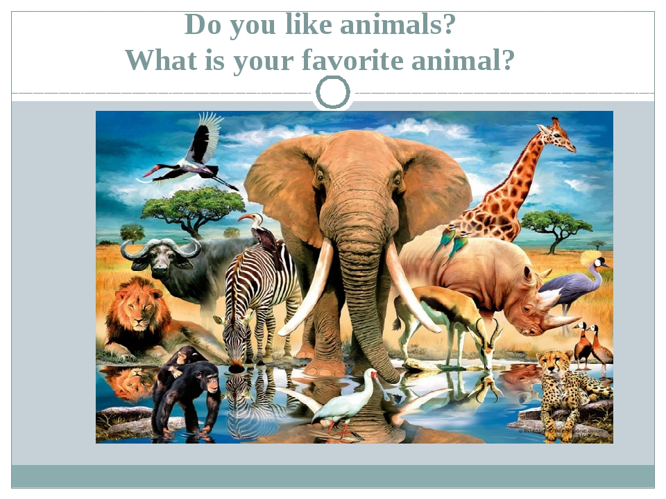 Do you like animals? What is your favorite animal?