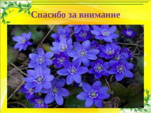 Спасибо за внимание Левитина Л.С. http://00149.ucoz.com/