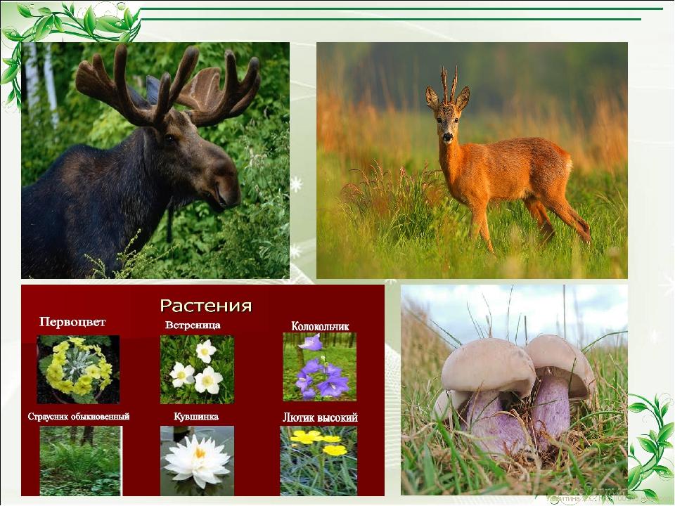 Левитина Л.С. http://00149.ucoz.com/ Левитина Л.С. http://00149.ucoz.com/