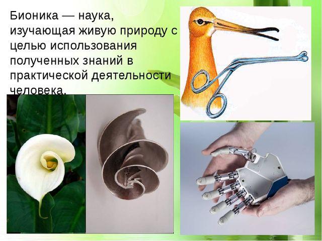 Бионика — наука, изучающая живую природу с целью использования полученных зн...