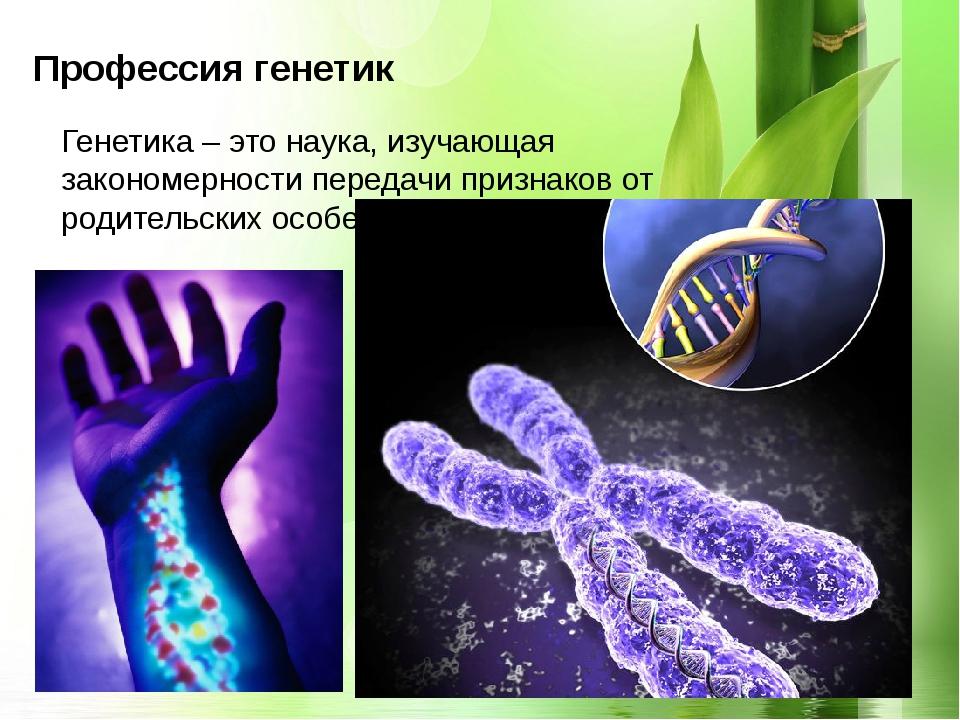 Профессия генетик Генетика – это наука, изучающая закономерности передачи пр...